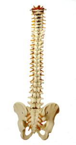 Smerter i ryggen? Prøv en dygtig kiropraktor